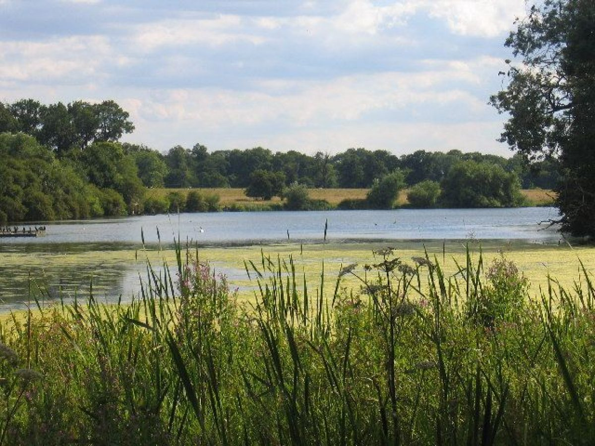 Pgds 20150520 075236 Coombe Abbey Country Park Heronry   Geograph Org Uk   34699